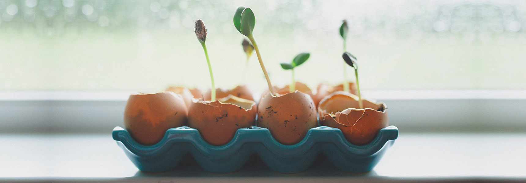Photo of plants growing in egg shells to depict someone beginning to invest money.